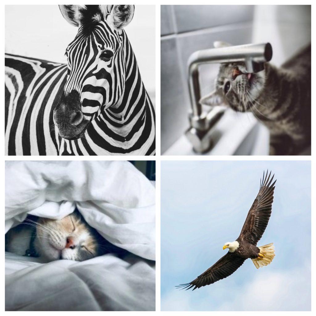 精選圖庫:動物